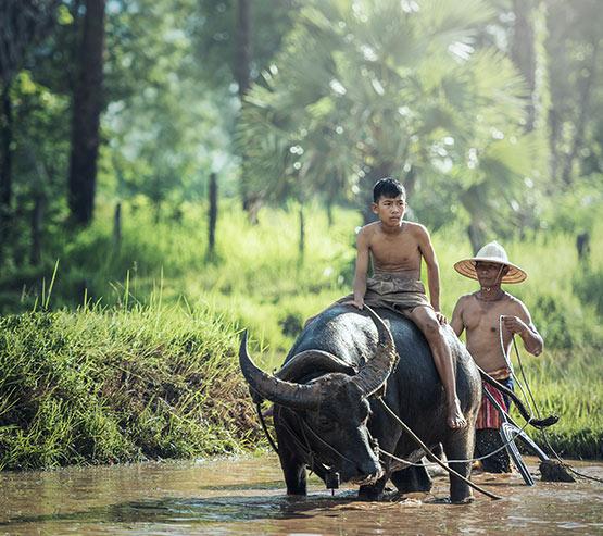 j-vietnam_555x493